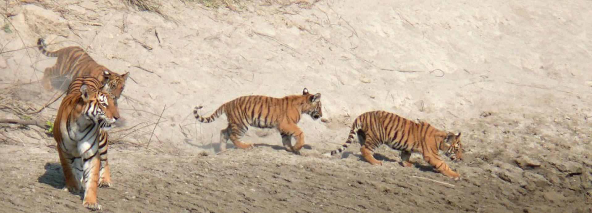 Bardia Wildlife Safari