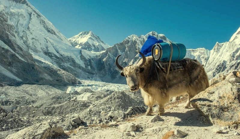 Everest Trek Becoming  No Plastic Zone